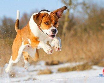 101 вопрос, который задала бы ВАША СОБАКА ветеринару (Часть 4)