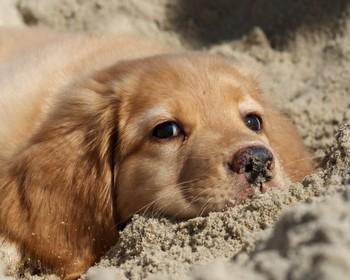 101 вопрос, который задала бы ВАША СОБАКА ветеринару (Часть 5)